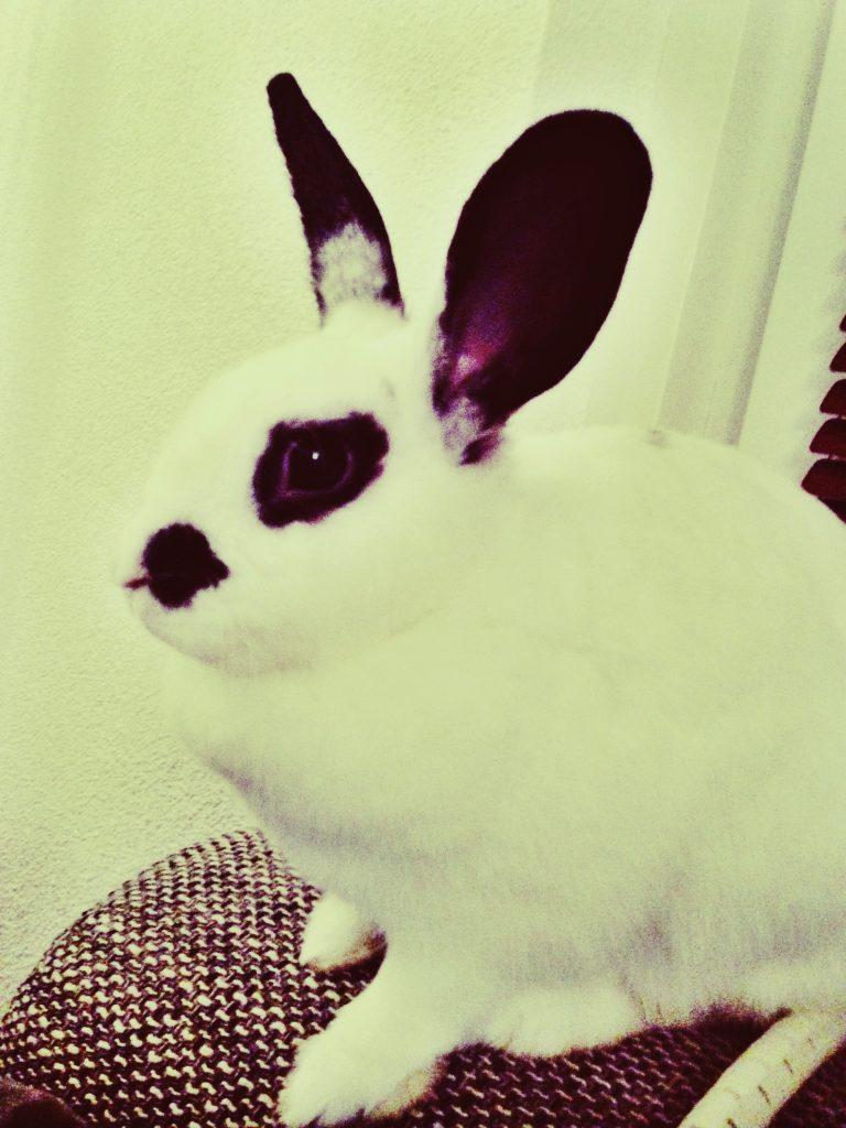 Een konijn heeft het niet altijd fijn