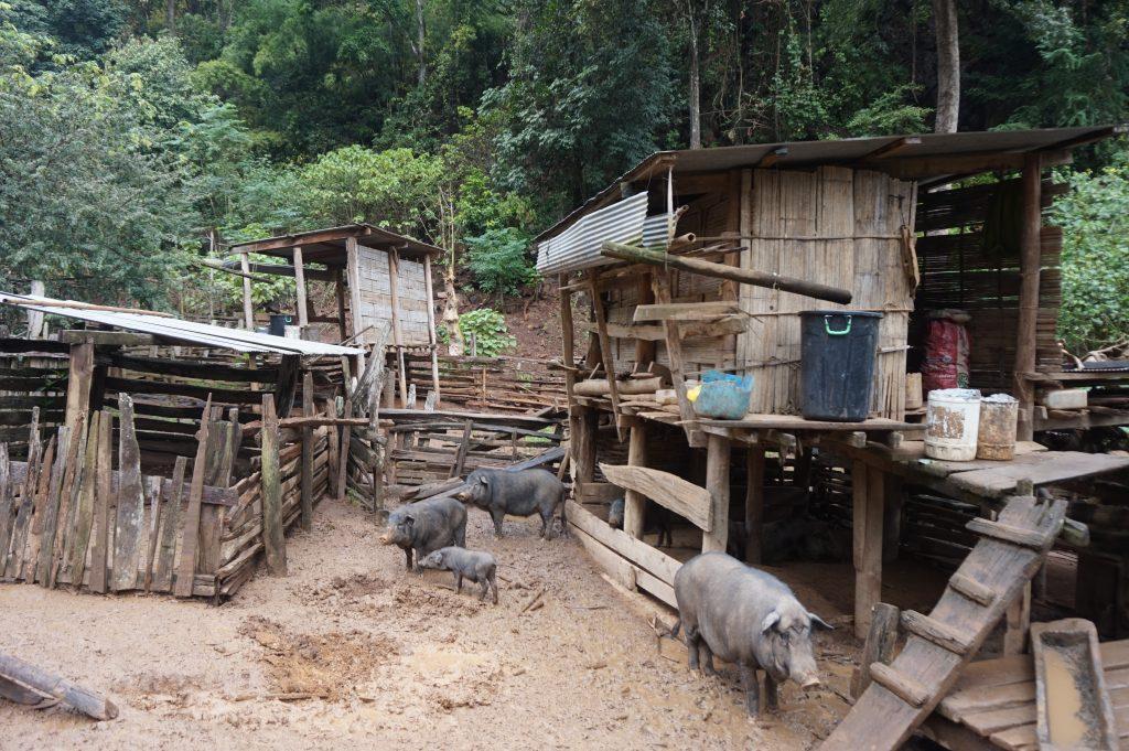 DSC08885 1024x681 - Mijn reis door Thailand: Bangkok & Pai - Deel 1